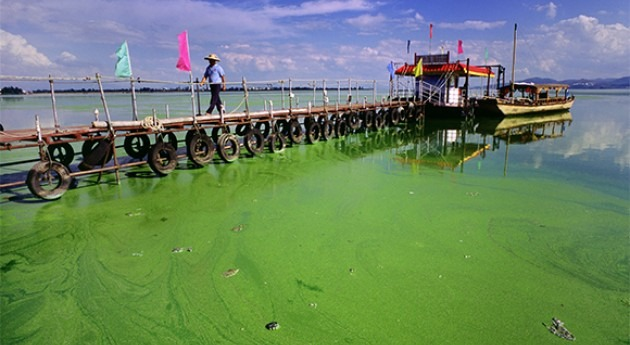 Fósforo: nutriente contaminante global