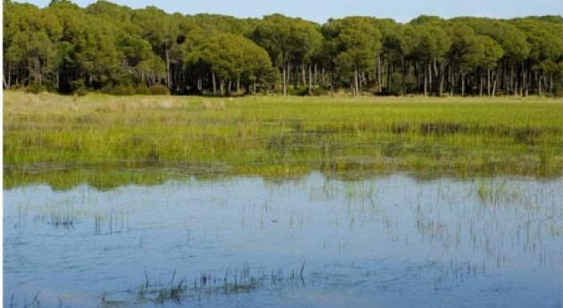 compra Mimbrales es oportunidad única generar empleo verde y recuperar Doñana