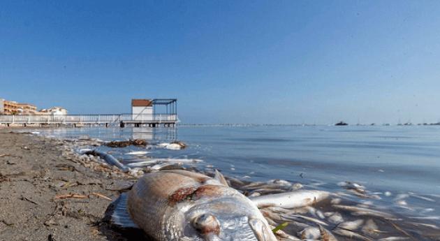 Mar Menor: bla, bla, bla...