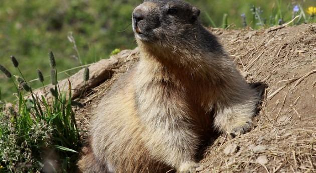¿Qué tienen común marmota, penalti y perfume?