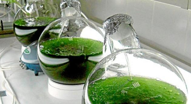 AQUALIA y CENTA llegan acuerdo uso microalgas depuración