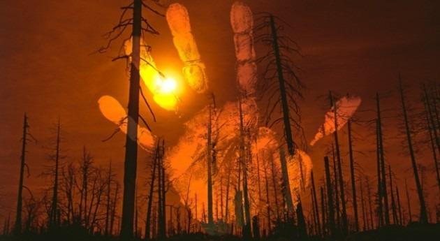 hombre, y no cambio climático, arrasó bosques Madagascar hace 1.000 años