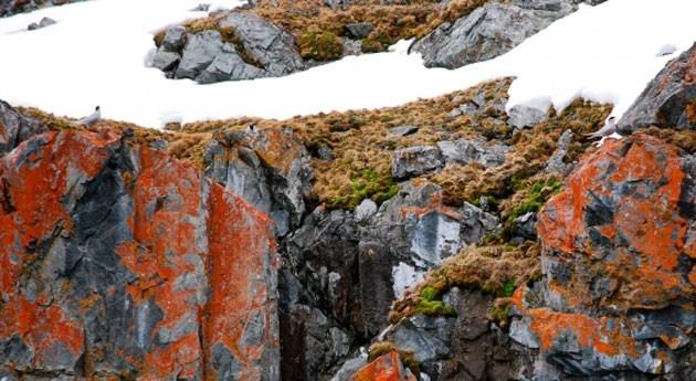 Aragón estudiará efecto clima propiedades hidráulicas plantas antárticas