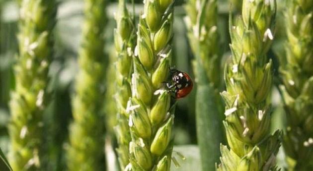 Más 100 expertos debatirán Navarra fertilización nitrogenada sistemas regadío intensivo