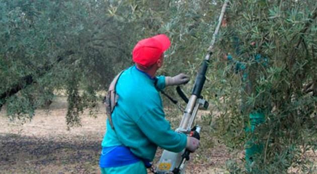producción aceite cae debido al déficit hídrico olivares jienenses