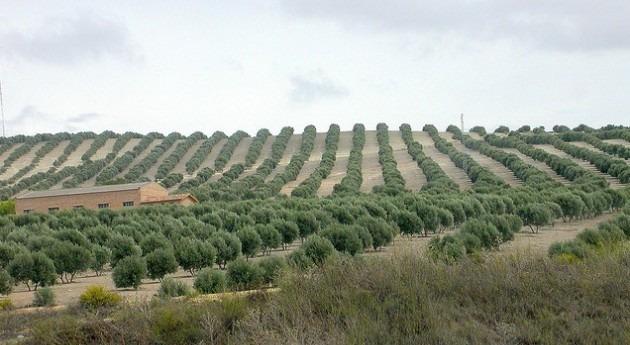 falta lluvia amenaza campaña agrícola y ganadera Andalucía
