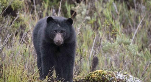 oso y contribución bosques y cabeceras cuenca (II)