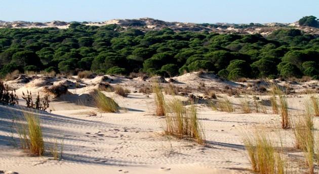 comisión Peticiones Parlamento Europeo pide cerrar todos pozos ilegales Doñana
