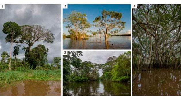 Varias imágenes el Amazonas. En la foto 4 se aprecia hasta donde llega el agua en uno los bosques que se inundan periódicamente llamados várzeas (foto 4).