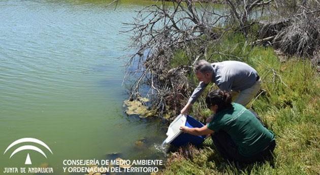 Andalucía inicia reintroducción pez fartet Guadalhorce asegurar pervivencia