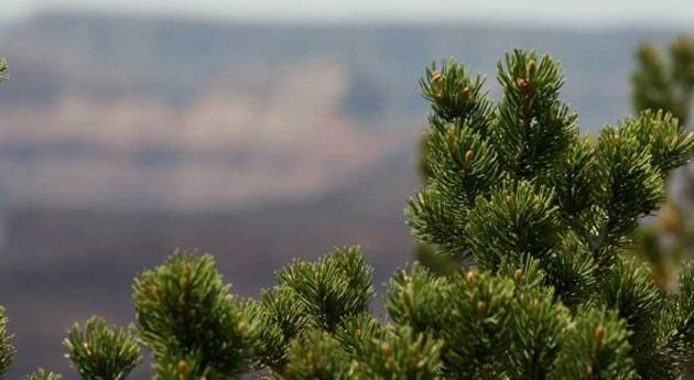 árboles que han sobrevivido periodos sequía tienen más probabilidades sobrevivir