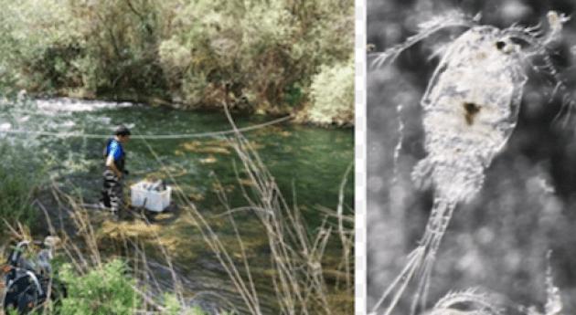 ecología zona hiporreica asociada ríos Henares y Tajuña (cuenca río Jarama)