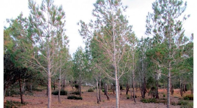 gestión forestal ecohidrológica mejora conservación suelo bosques semiáridos