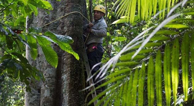 rápida recuperación bosques tropicales, fundamental cambio climático