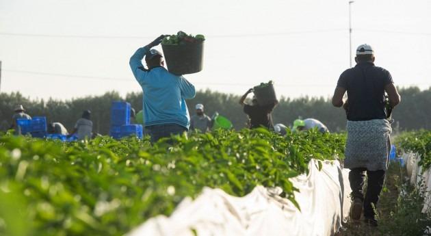 regadío Campo Cartagena genera 47.400 empleos y VAB 2.800 millones euros al año