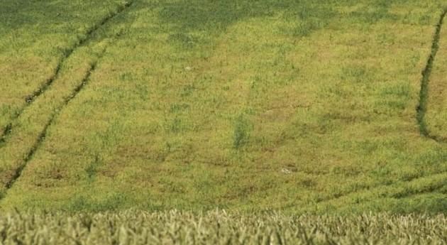 MAGRAMA adjudica modernización regadíos Molinar Flumen 17,8 millones euros