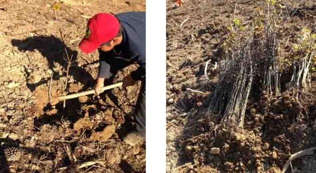 URA y Fundación LURGAIA finalizan labores revegetación Cuenca Río Oka