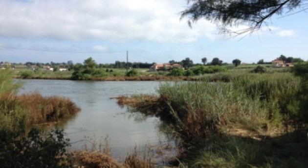 Proyecto LIFE Miera: ¿Cómo erradicar chilca Ría Cubas, Santander?