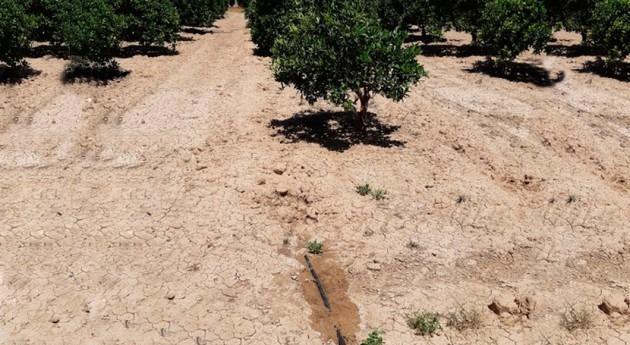Murcia fomenta riego subterráneo favorecer recuperación y protección Mar Menor