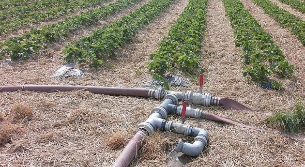 Riego precisión: ¿Cuánta agua necesitan cultivos?
