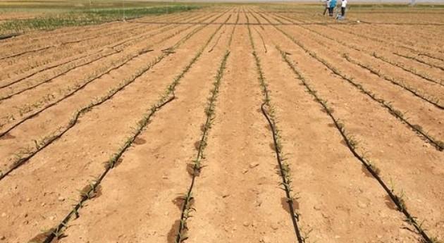 Ensayan diferentes sistemas riego maíz finca experimental ' Tiesas'