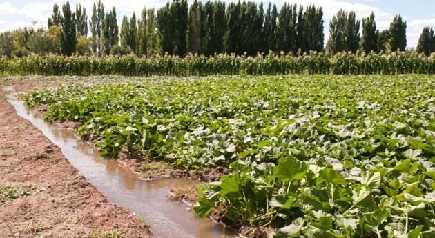 Gobierno Murcia solicita CHS información 36 expedientes regadío ilegal