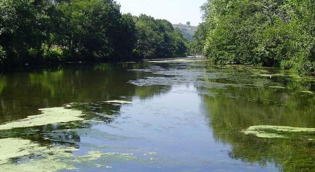 Voluntarios Proyecto Rios eliminan 350 kilos flora invasora río Saja