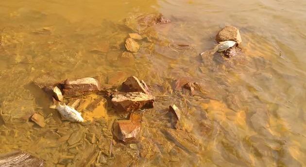 Ríos rojos: problema ambiental aguas ácidas mina