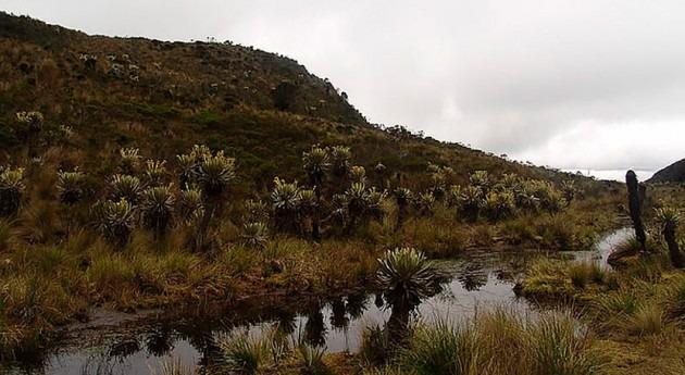 sabana Bogotá vivió Pequeña Edad Hielo