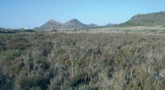 Saladares Cordovilla y Agramón y Laguna Alboraj, nuevas ZEPAS C-LM