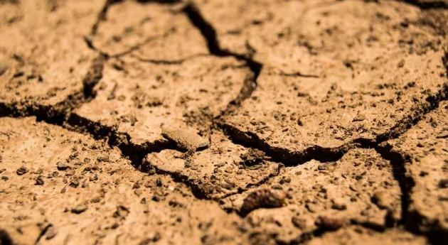 vendimia podría bajar 2 millones hectolitros si persiste sequía Castilla- Mancha