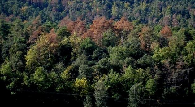 Ya se puede predecir sequía bosques catalanes