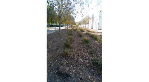 sistemas urbanos drenaje sostenible (SuDS)