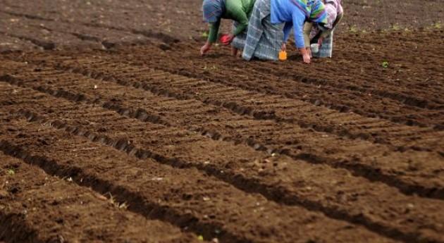 los suelos f rtiles de latinoam rica albergan el futuro de