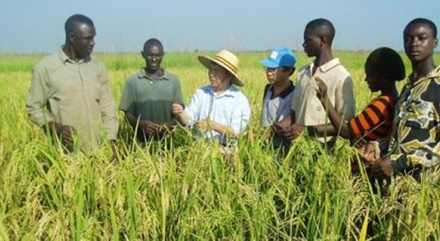 agricultura, clave enfrentar desafíos cambio climático Caribe
