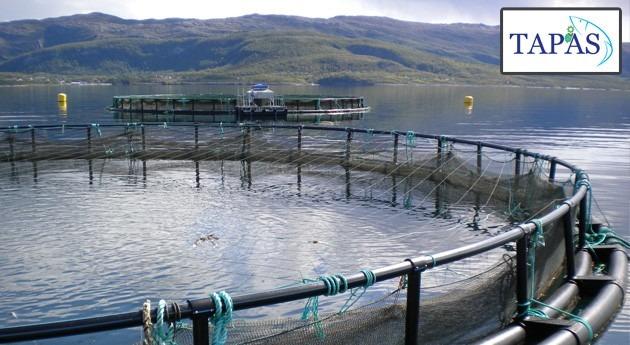 Evaluación riesgo ecotoxicológico productos químicos usados acuicultura