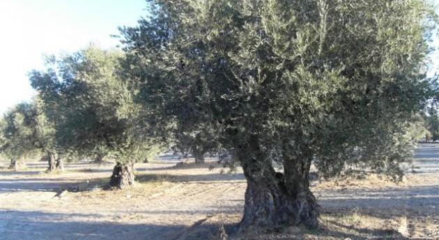 Unión Agricultores y Ganaderos Extremadura pide que nuevas zonas regables Barros se contemplen como regadío