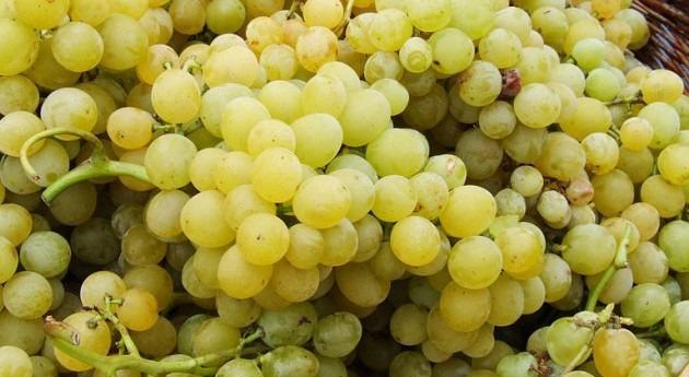 sequía provoca pérdida 50% cosecha uva Comunidad Valenciana