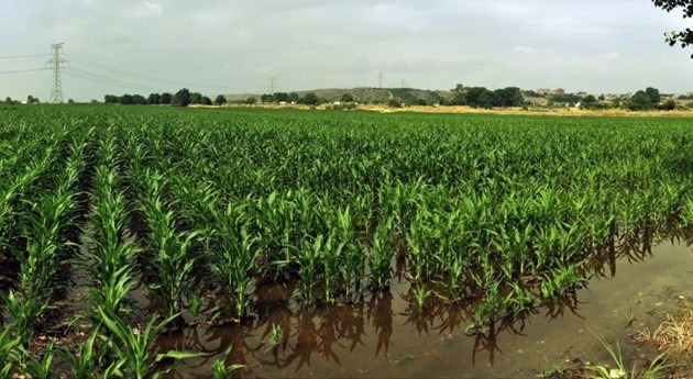 Vega baja Jarama, agricultura y calidad agua
