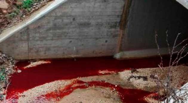 Alarma río Duero aparición vertidos sanguinolentos