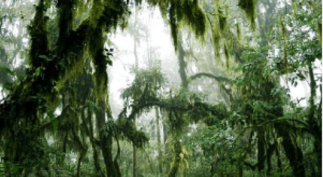 tensa humedad que palpita selva montaña: Yungas