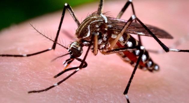 ¿Puede fenómeno Niño tener algún efecto virus Zika?