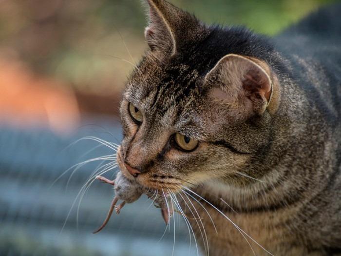 De Ratones Y Gatos Iagua