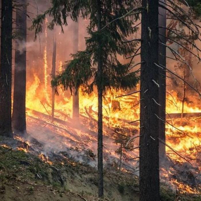 Incendios forestales y su afectación a las aguas   iAgua