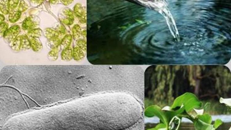 Biotecnología Ambiental Y Tratamiento De Aguas Iagua
