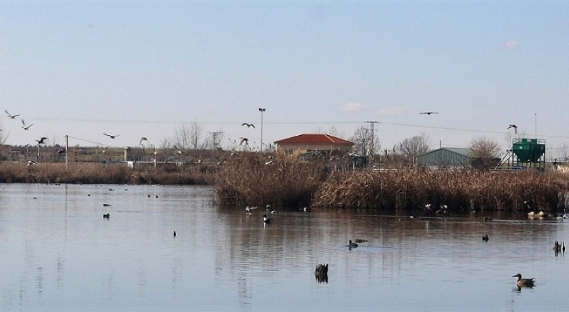 Biodiversidad gracias depuración aguas. laguna Navaseca, oasis Mancha