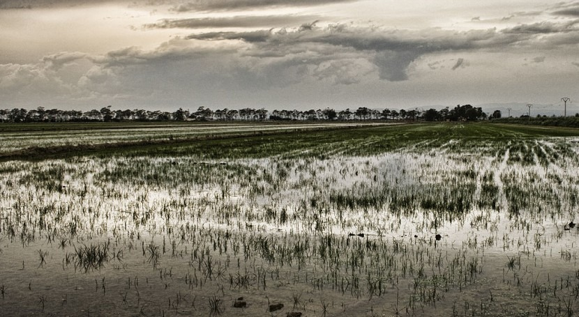 Proyecto LIFE+ EBRO - ADMICLIM: proyecto futuro Delta Ebro