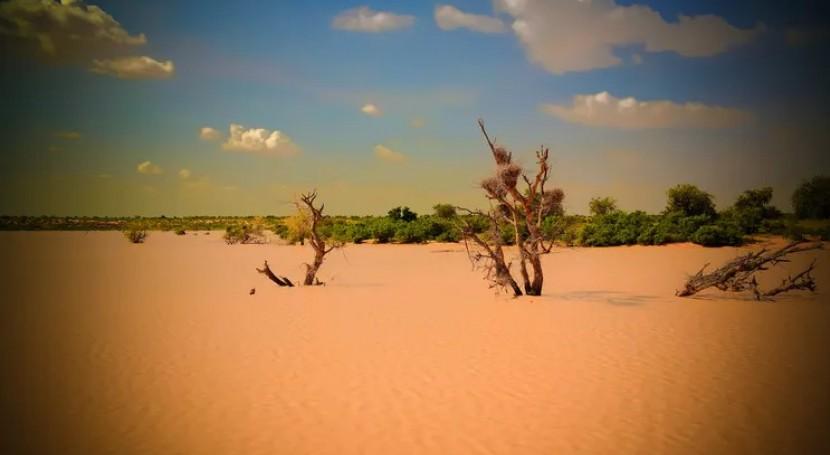 Diez buenas noticias desertización
