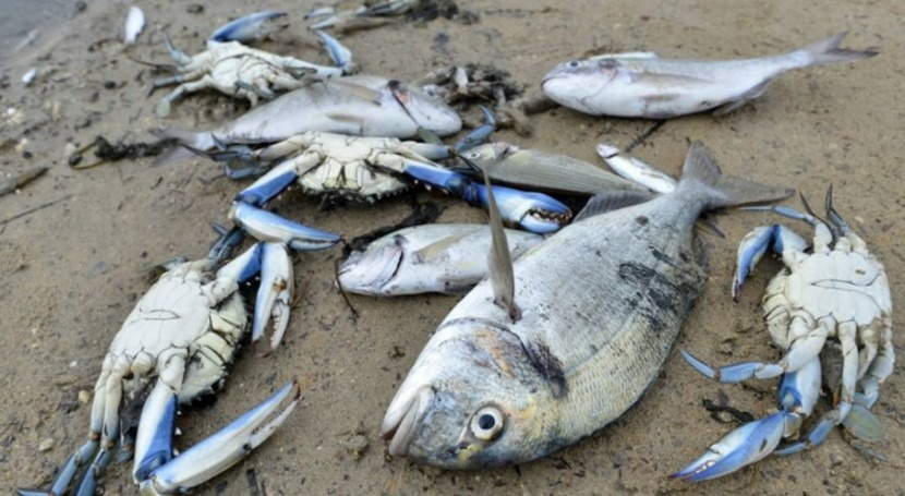 Mejillones, ¿solución al problema Mar Menor?