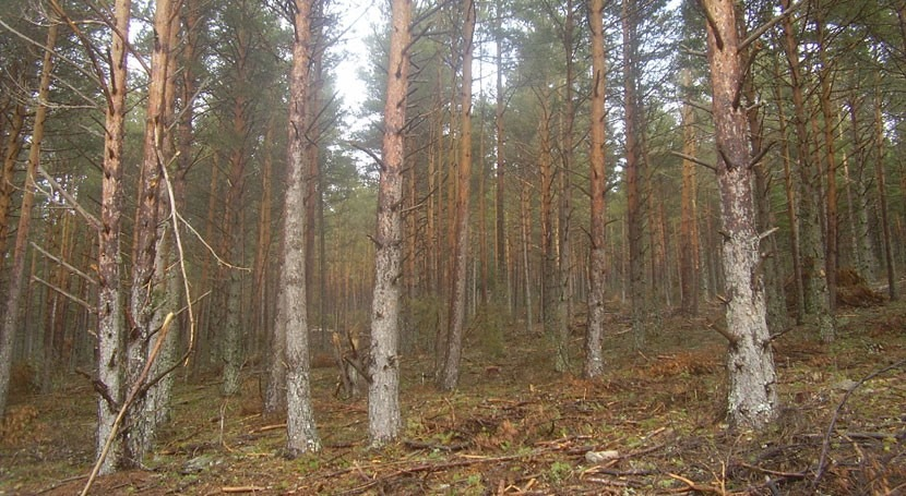 tesis mejora predicción efectos cambio climático bosques españoles